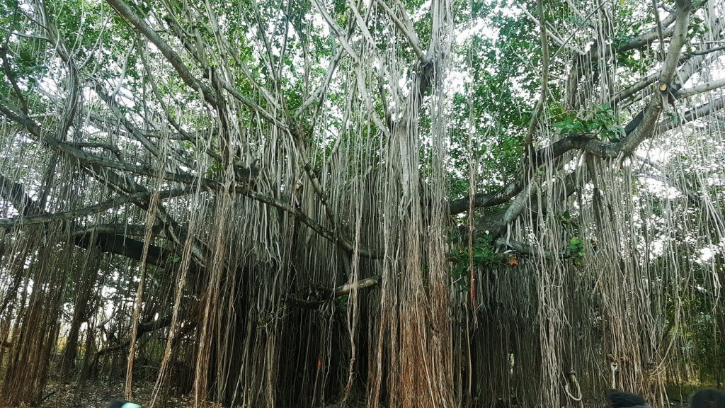 L'arbre des âmes - Avatar