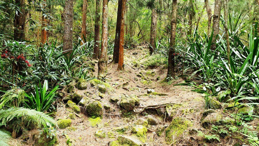 Forêt de Filaos